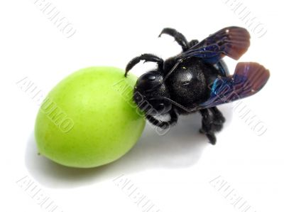 insect and green plums