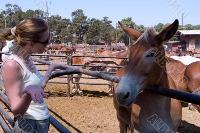 Talking to a mule