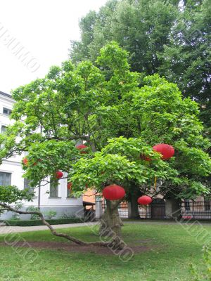 Red lanterns on a green tree