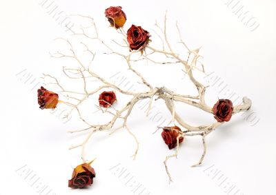 Barren Branch with Rose Buds