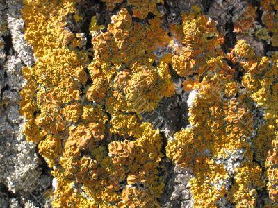 moss on a tree crust