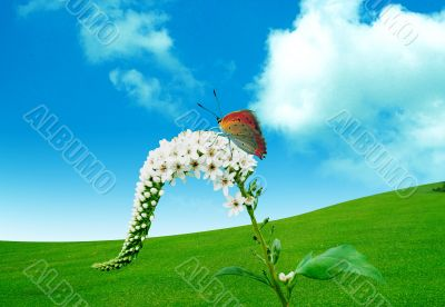Butterfly and a spring flower