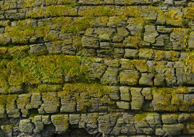 Moss-grown cliff bachground