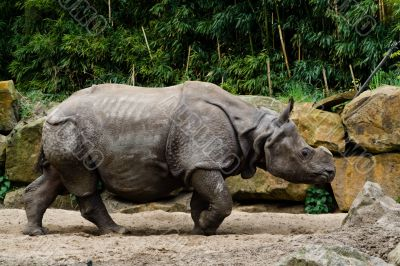 Rhino in zoo