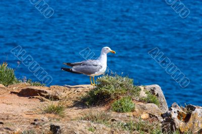 A proud seagull sitting in the sun