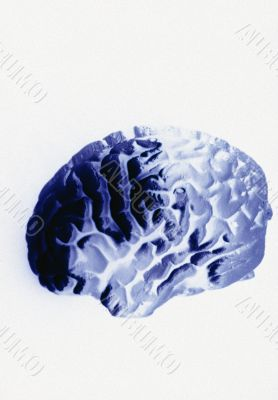 Human Brain on white background