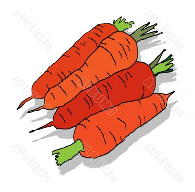 fresh carrot with leaves, isolated on white background illustrat