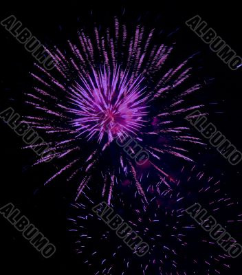 violet delight firework festival party