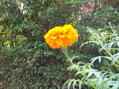 very nice flower in garden
