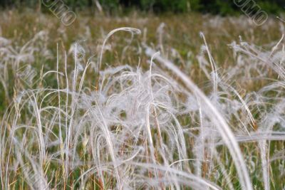 soft spring grass in natural