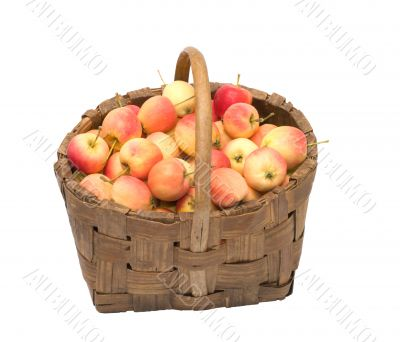 Crop of apples.