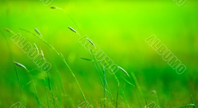 Grass pile on the smooth blurred green background