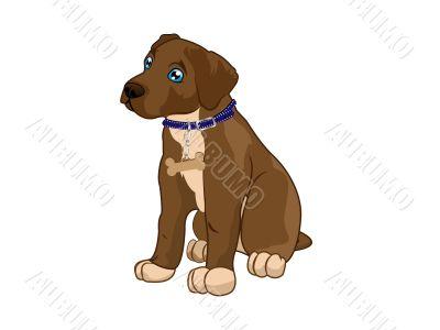 dog pet vector