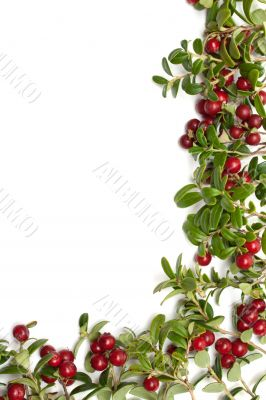 Frame from of the cowberry