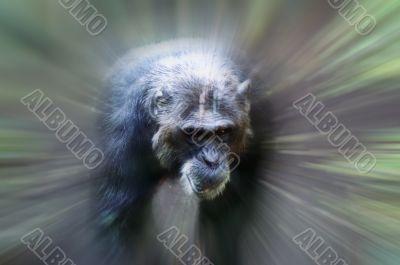 Monkey in focus