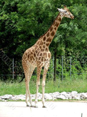 the highest animal
