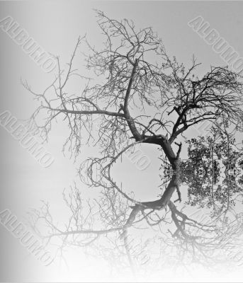 moon/branches