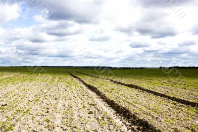 field with horizon