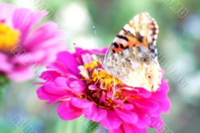 Dreamlike photography of a butterfly on a flower