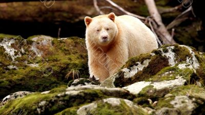 bear eating food