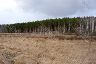 At the edge of a pine forest on a cloudy day.