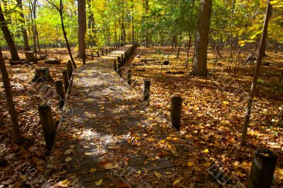 pedestrian walkway and autumn trees