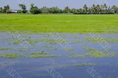 Indian Swamp