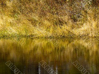 riverbank in ontario