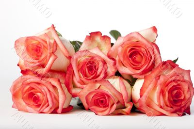 Bunch of Pink Roses Lying