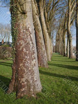 grove of barren trees
