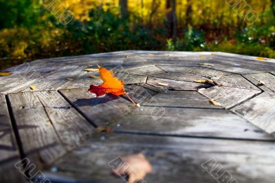 maple on wooden plank