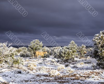 horse with dark sky and snow in arizona