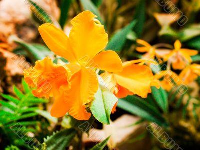 cream orange flower