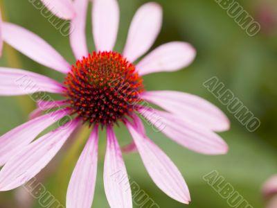 close up shot of pink flower