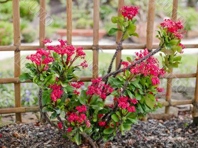 Bright Pink Small Flower Bush