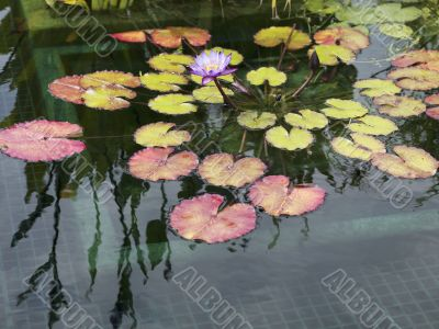 view of water lily