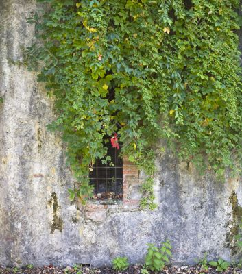 plants on a concrete wall with open window
