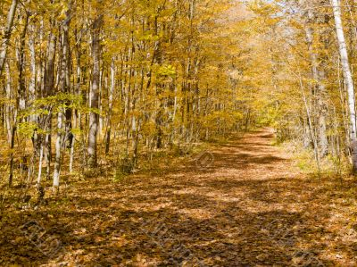 shadowy trail in ontario
