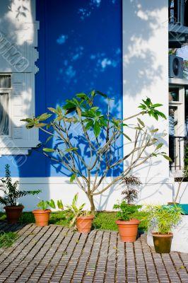 Plants in Kochi