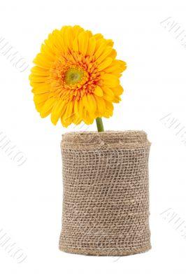 yellow daisy on vase