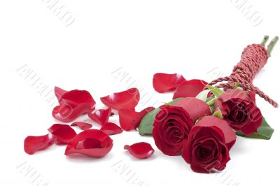 three red roses with rose petals