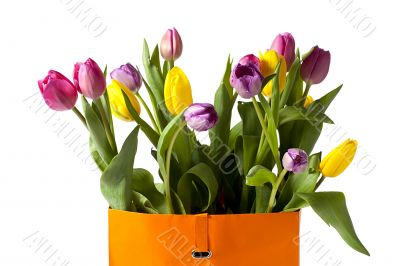 close up image of colorful tulips