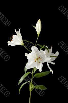 white flower on dark