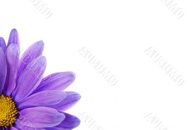 cropped shot of a purple flower