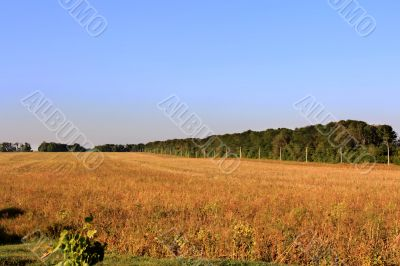 Hay, field and blu sky