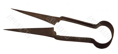 Old sheep scissors