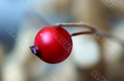 Rose hip decoration