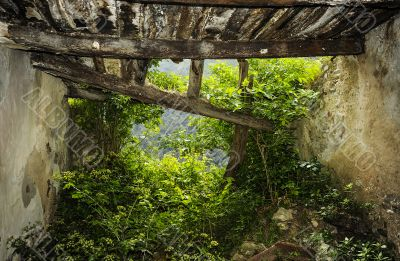 Nature enters in the ruined house