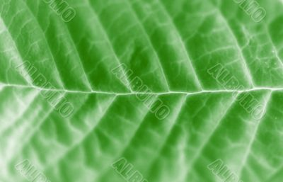 Leaf macro abstract