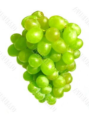 Bunch of white grape close-up.